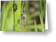 Dragonfly Metamorphosis - Tenth In Series Greeting Card
