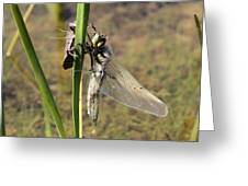 Dragonfly Newly Emerged - Second In Series Greeting Card
