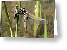 Dragonfly Newly Emerged - Third In Series Greeting Card