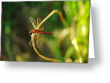Dragonfly On A Summer Day Greeting Card