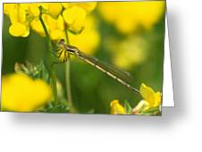 Dragonfly On Birds-foot Trefoil Greeting Card