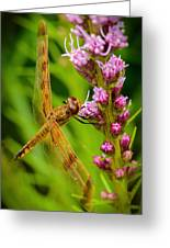 Dragonfly On Liatris Greeting Card