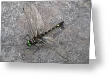 Dragonfly On Rock Greeting Card