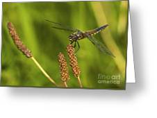 Dragonfly On Seed Pod 2 Greeting Card
