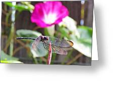 Dragonfly On Watch Greeting Card by Walter Klockers