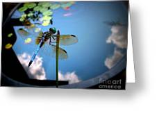 Dragonfly Reflecting On A Beautiful Day Greeting Card