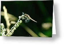Dragonfly Resting In The Wind  Greeting Card