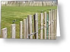 Dragonfly Runway Greeting Card