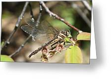 Dragonfly Up Close Greeting Card