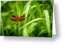 Dragonfly Waits Greeting Card