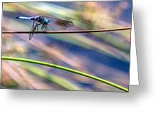Dragonfly Walking A Tightrope Greeting Card