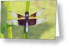 Dragonfly - Widow Skimmer Greeting Card