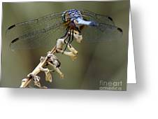 Dragonfly Wing Details Greeting Card
