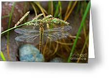 Dragonfly X-ray Greeting Card