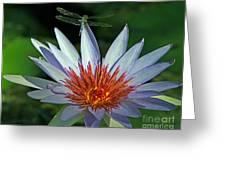 Dragonlily Greeting Card