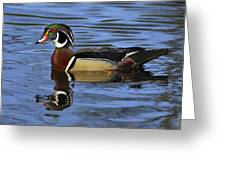 Drake Wood Duck Greeting Card