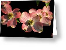 Dramatic Dogwood Flowers Greeting Card