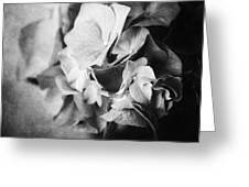 Dramatic Hydrangea In Black And White Greeting Card