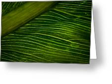 Dramatic Leaf Abstract Greeting Card