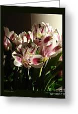 Dramatic Lilies Greeting Card