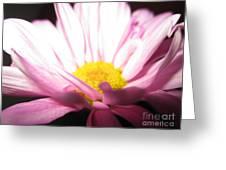 Dramatic Pink Greeting Card