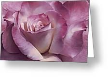 Dramatic Plum Rose Flower Greeting Card