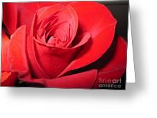 Dramatic Red Rose  Greeting Card