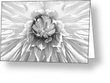 Dramatic White Dahlia Flower Monochrome Greeting Card