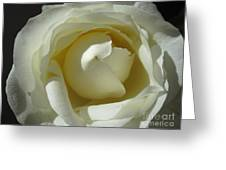 Dramatic White Rose 2 Greeting Card