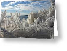 Draped In Icy Beauty Greeting Card
