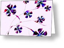Dream Flowers Greeting Card