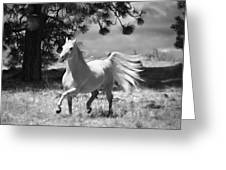 Dream Horse Greeting Card
