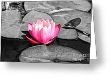 Dream Lily Greeting Card by Mariola Bitner