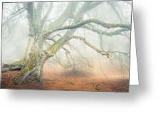 Dream Oak II Color 1 Greeting Card