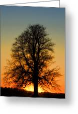 Dream Tree At Sunset Greeting Card
