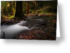 Dreaming Forest Greeting Card