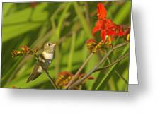 Dreaming In The Nectar Greeting Card