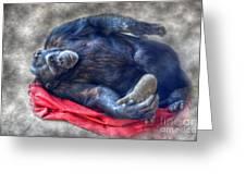 Dreaming Of Bananas Chimpanzee Greeting Card