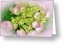 Dreaming Of Pink Hydrangeas Greeting Card