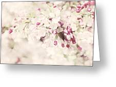 Dreaming Of Spingtime Blossom Greeting Card