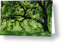 Dreaming Under The Old Oak Greeting Card