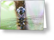 Dreaming With A Dragonfly Greeting Card
