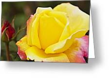 Dream's Come True Rose By Walter Herrit  Greeting Card