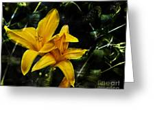 Dreams Of A Day Lily Greeting Card