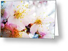 Dreamy Blossom Greeting Card