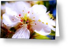 Dreamy Cherry Blossom Greeting Card