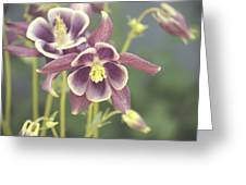 Dreamy Columbine Flowers Greeting Card by Cathie Tyler