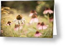 Dreamy Coneflowers Greeting Card