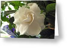 Dreamy Creamy Gardenia Greeting Card