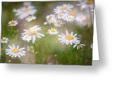 Dreamy Daisies On Summer Meadow Greeting Card
